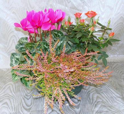 CPE-La Composition de Plantes d'Extérieures