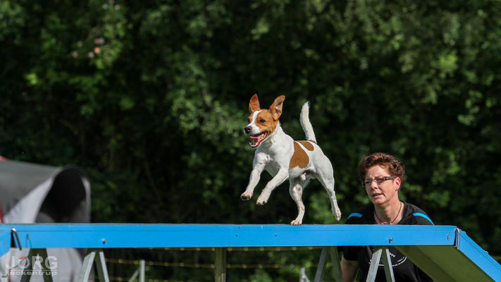 Aktuelles 2016 - Terrier vom Seeberg