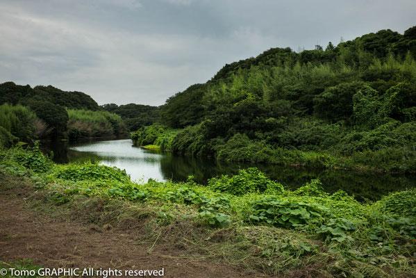 これ花見川です。河口付近に見慣れているからびっくりします。