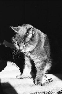 そして老猫アミチャンも...