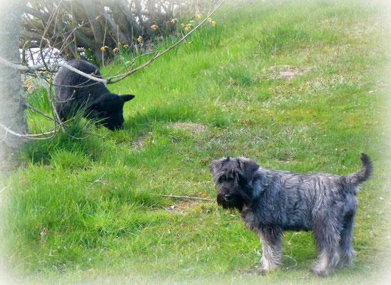 Nixe und das Schafslamm Gisela
