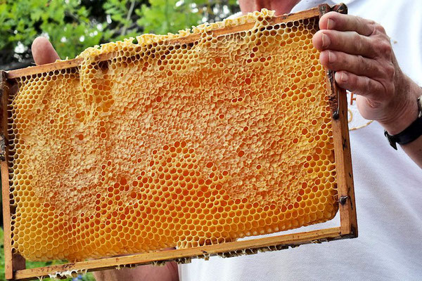 Der Imker erklärte detailliert, wie der Werdegang des Honigs ist und wie viel Arbeit die Biene leisten muss, damit auch nur ein einziger Löffel voll davon zustande kommt. Staunend und begeistert hörten die Besucher zu.