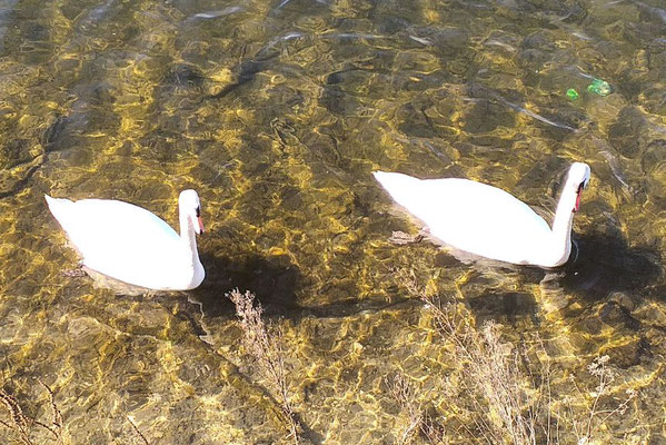 Eicher See