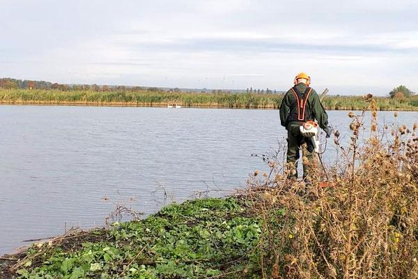 Etwas erschwert durch Wasser im Uferbereich konnte Matthias doch einiges für die Sicht von der Beobachtungshütte aus tun.