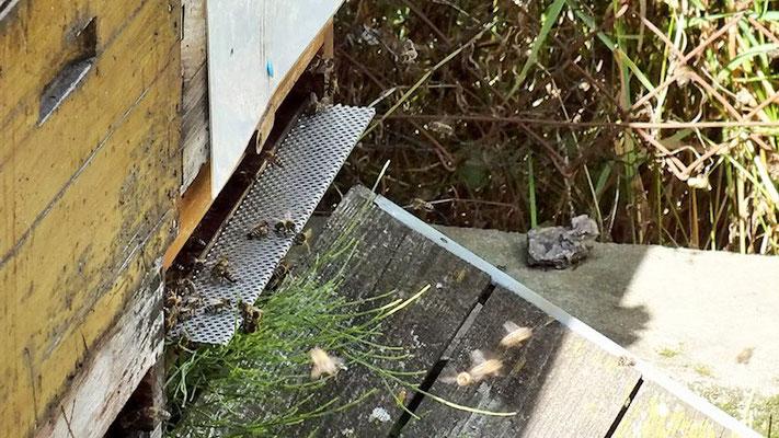 Wer betört war von dem einmaligen Aroma, konnte nun auch Honig erwerben für das nächste Frühstück.
