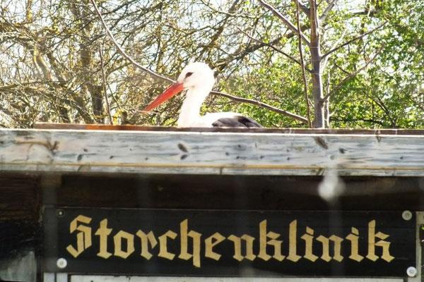 Storchenscheune