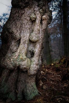 Bad Bederkesa: Baum am See nahe Schützenhaus