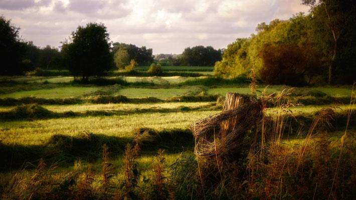 Nordholz: Tief stehende Sonne über den Wiesen