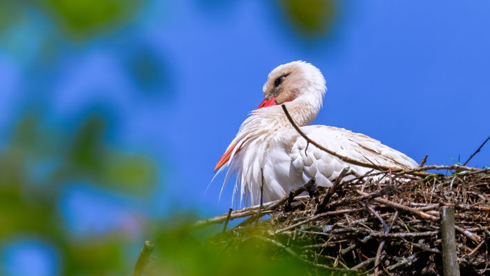 Storch, dösend an einem heißen Tag in Hitzacker/Elbe
