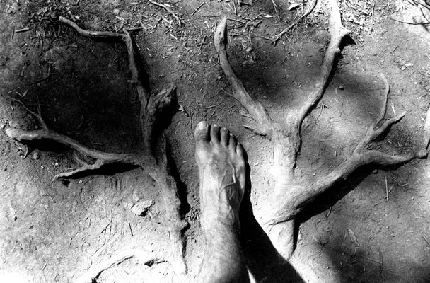 Roots, 1998©Fausto Marci