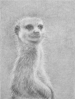 Graphit-Bleistift auf Papier 40x30