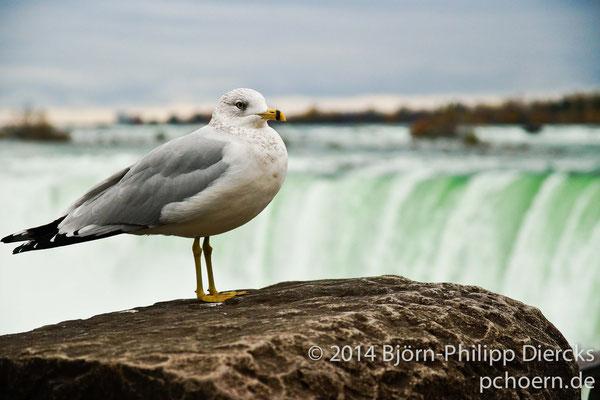 Möwe - Niagara Falls
