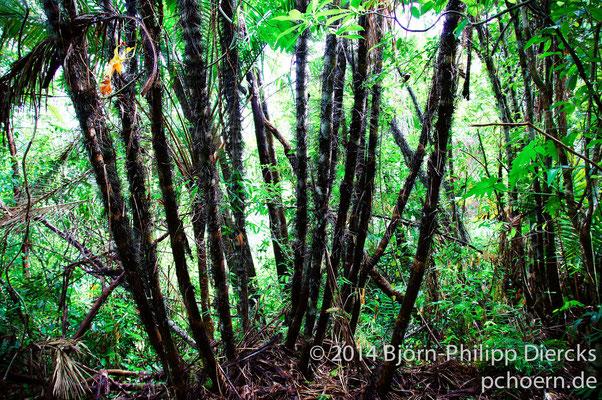Alexander Humboldt Nationalpark