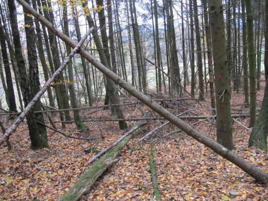 Waldinneres (Nadelwald)