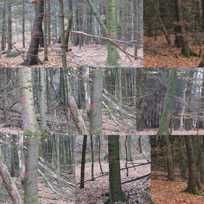 Exempel Fällmarkierungen Edellaubbaum