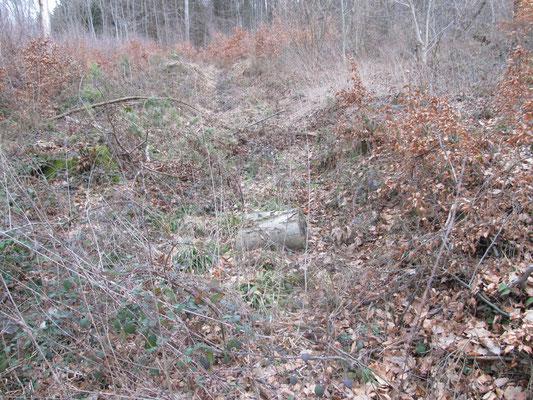 Bodenverwilderung