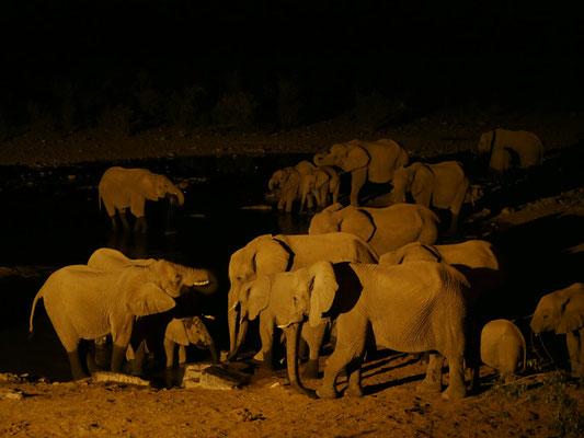 Die aggro Elefanten