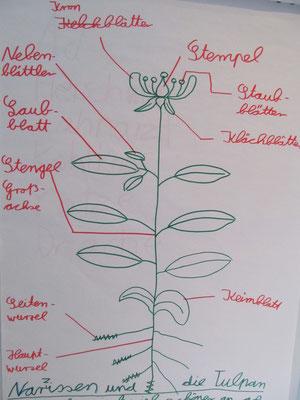 Lichtblick - die Blume im Detail