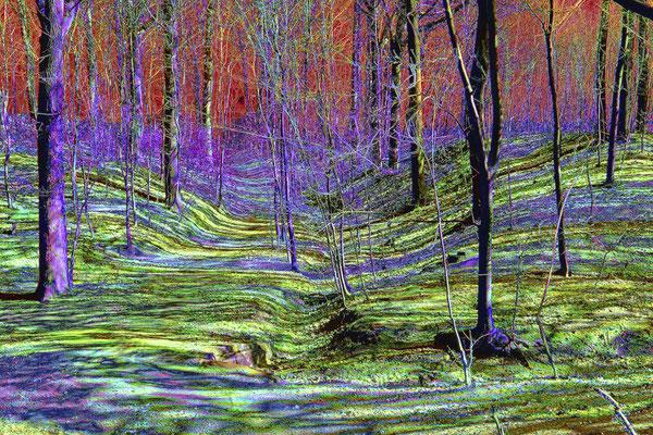Waldweg im Licht / 2012