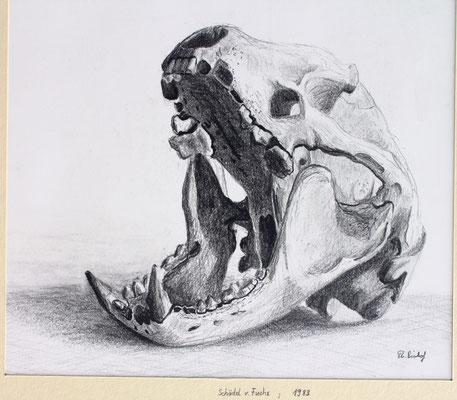Fuchsschädel gefunden im Wald, Bleistift / 1983