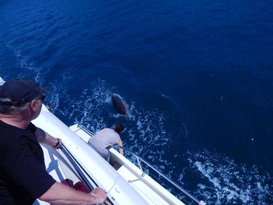 Eindrucksvolle Delfinbegleitung