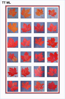 Tea Towel - Tea Towel Maple Leaf    TT ML