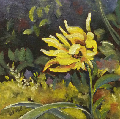 Sunflower In The Wind - 8x8 oil on canvas board - unframed   110. + shipping