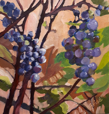 Wild Grapes - 6x6 oil on birch box panel - $75. CA + shipping - Contact me to view or purchase.