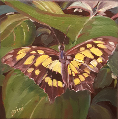 Butterfly - 6x6 oil on birch box panel -  $75. CA + shipping - Contact me to view or purchase.