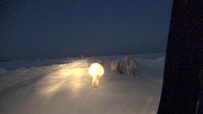 Hitchhiking to the coldest village on earth, Oimjakon