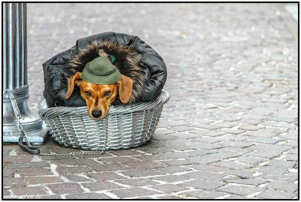 Dackel mit Tiroler Hut#Salzburg#Straßenkünstler#Sonderbares