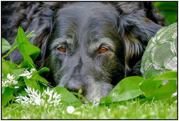 Hundeportrait#Ball