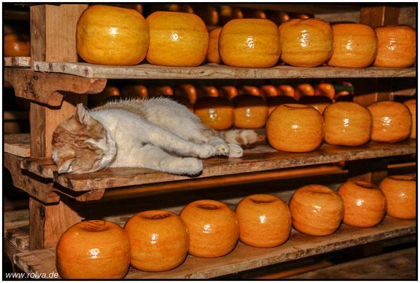Alles Käse#Schlafplatz#Sonderbares
