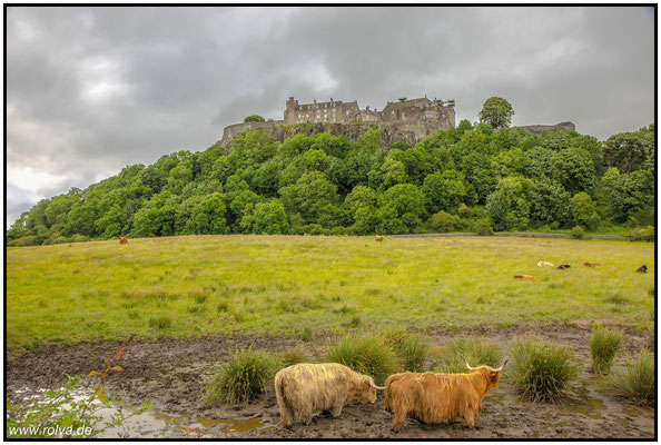 Stirling castle#Schottische Hochlandrinder#Stirling