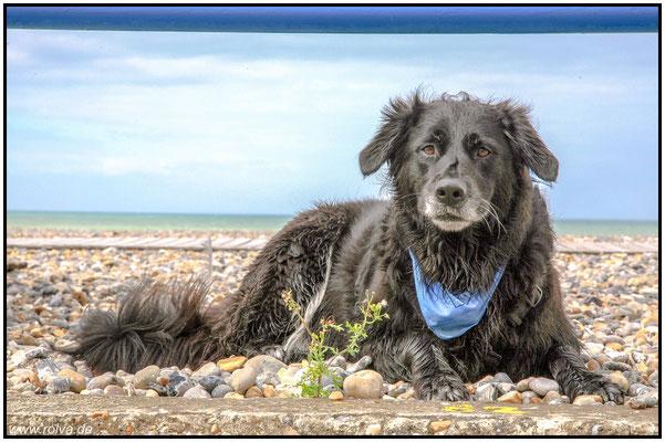 Hundeportrait#Küste#Wasser
