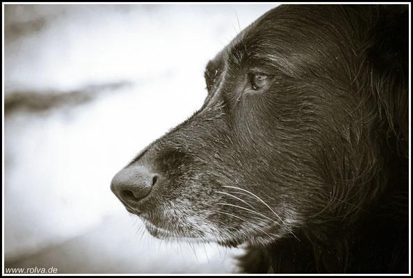 Hundeportrait, Schwarz - Weiß