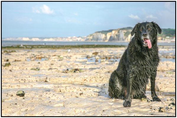 Hundeportrait#Strand#Wasser