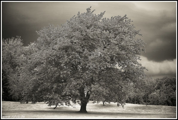 Baum # Eiche # Schaukel # Schwarz Weiss
