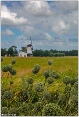 Colijnsplaat#Windmühle#Noord Beveland