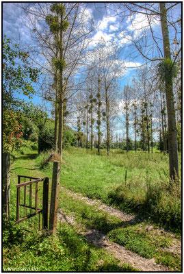 Mergelland#Misteln#Wandern