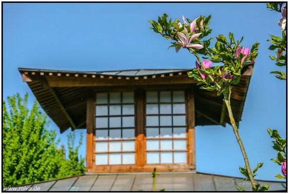 japanisches Teehaus#Mandelblüte