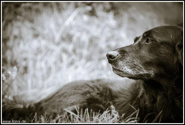 Hundeportrait#Schwarz - Weiß