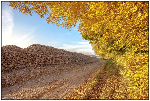 Herbst#Rübenernte