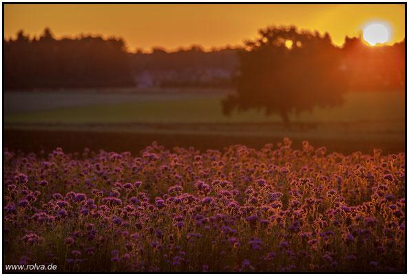 Sonnenuntergang#Feld Aachen