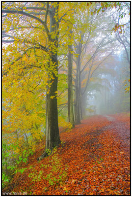 Herbst#Geul#Schin op Geul