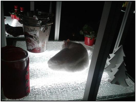 Katze als Weihnachtsdeko#Sonderbares