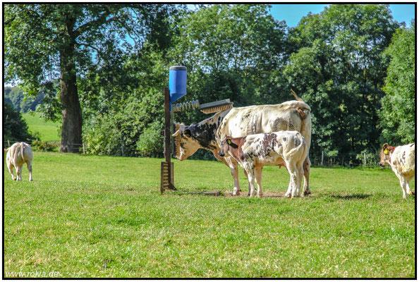 Wellness für Kühe#Sonderbares