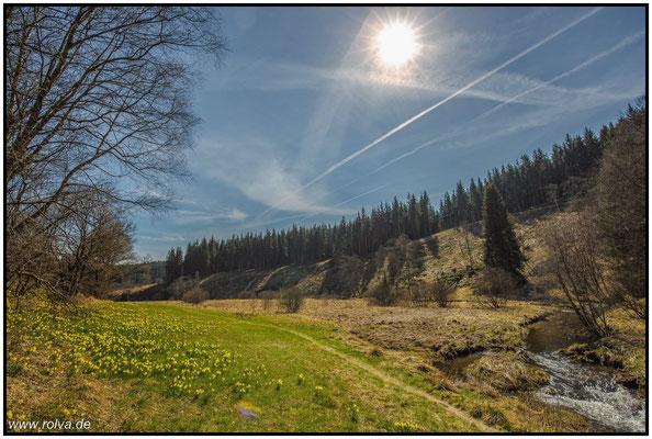 Narzissenwiesen bei Monschau