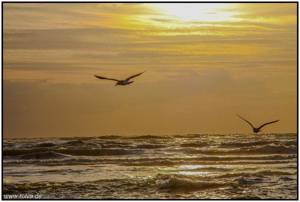 Möwe#Sonnenuntergang#Meer