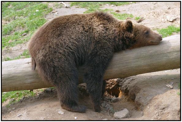 Dynamik#fauler Bär#abschalten#Sonderbares